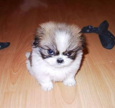Humeur du jour... en image - Page 6 Angrydog