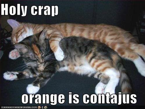 Random Images and gif Thread. Orange