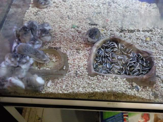 Malas tiendas de animales: Ficha específica. 0222