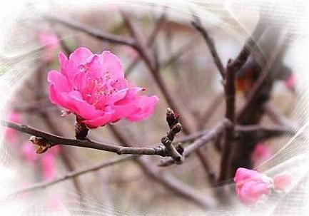 Chiếc nón bài thơ - Page 6 Mongxuan_zps3ace5204