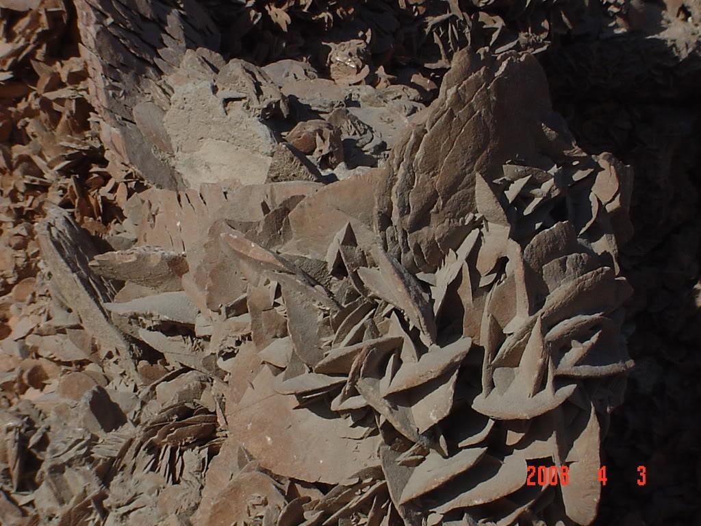 ورقلة مدينة الساندروز DSC02683