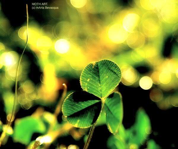 Meaning Of The Four-Leaf Clover Edittttttt