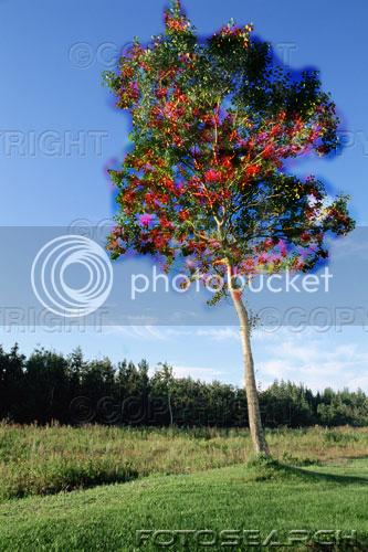 Plant Leaflet/Poster Brosebree