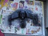 Klingon Bird Of Prey Th_DSC06767_zpsce8a57d0