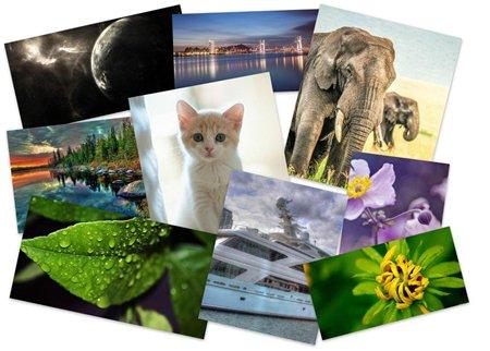 احدث صور حيوانات رائعة جدا وصور طبيعية بجودة عالية 2013 صور جديدة 2013 02bd486d320337967647d55e86b469fa
