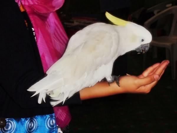 Burung Nuri & Kakak Tua PC290565