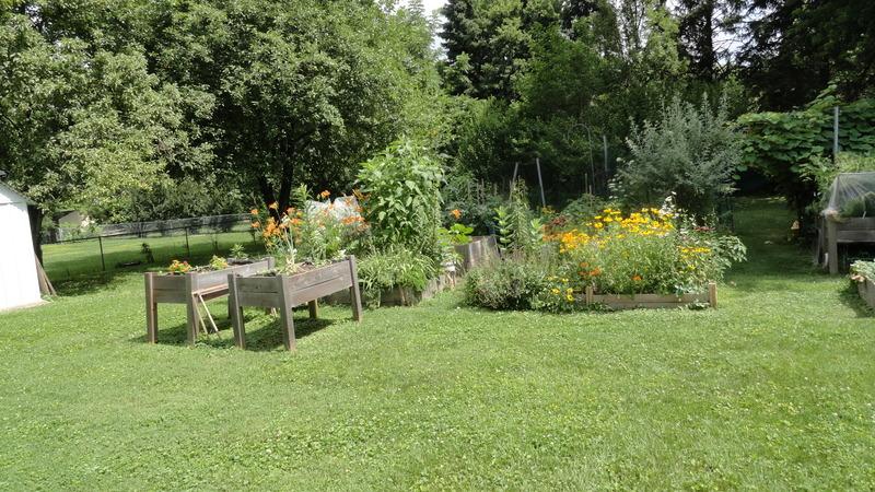 My early garden DSC00649_zpshuclcmlw