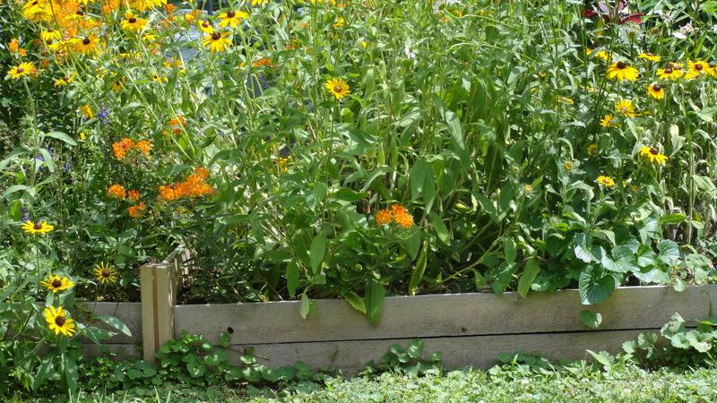 My early garden DSC00650_zps7o6qc1wj