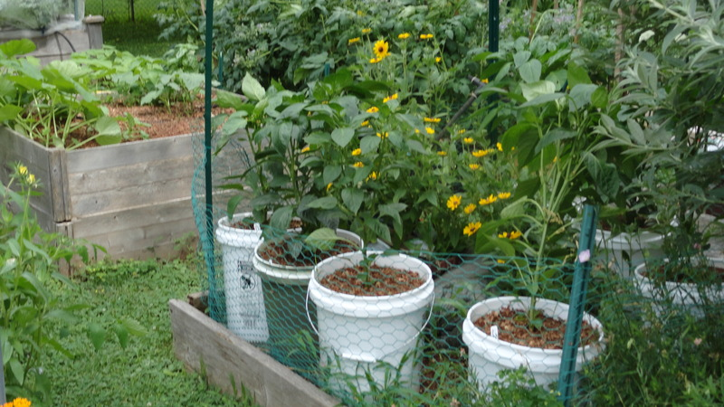 My early garden DSC00651_zpsomz0vlqa