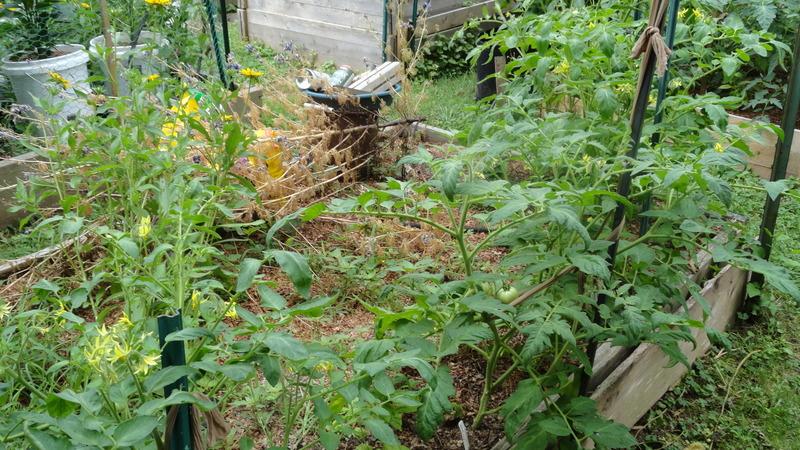 My early garden DSC00653_zpskulonqbd