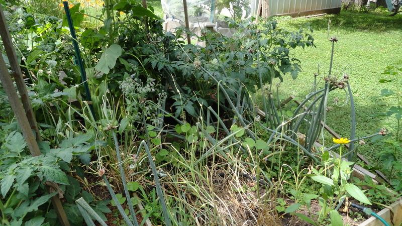 My early garden DSC00659_zpsvbj5huht