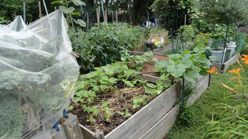 My early garden DSC00661_zpsdgnj4snt