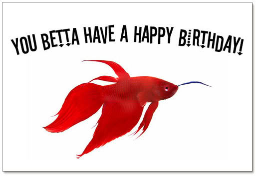 beta fish birthday Pictures, Images and Photos