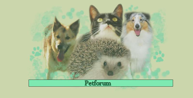 Animal Forums