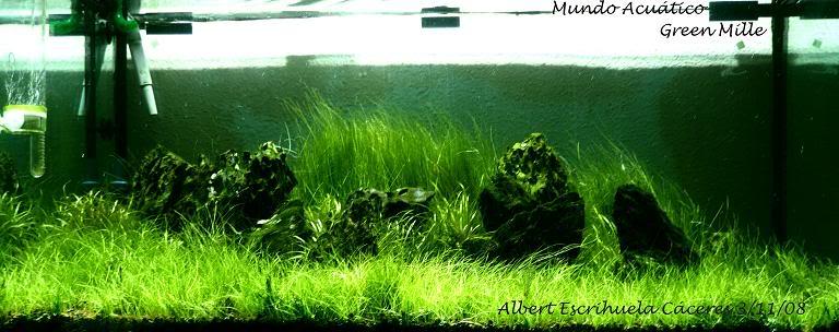 """Green Mille"" Acuariocopiacopia"