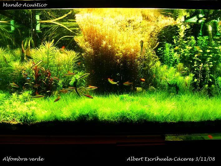 """Alfombra Verde"" DSCF6681copia"