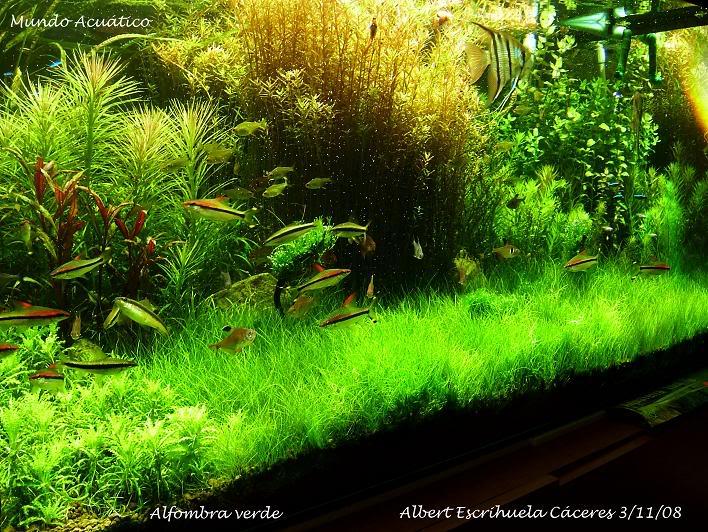 """Alfombra Verde"" DSCF6706copia"