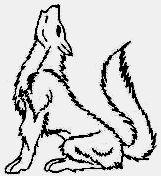 Mammifere Le Loup Assis