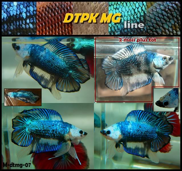 F3 DTPK mustard gaz metalliques, les photos MDTmg07collageupdate