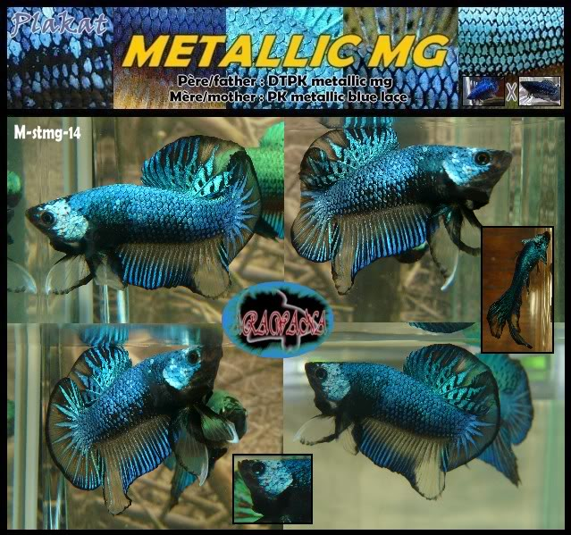 F3 DTPK mustard gaz metalliques, les photos MStmg14collageV