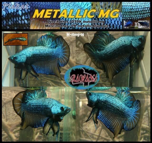 F3 DTPK mustard gaz metalliques, les photos MStmg16collageV
