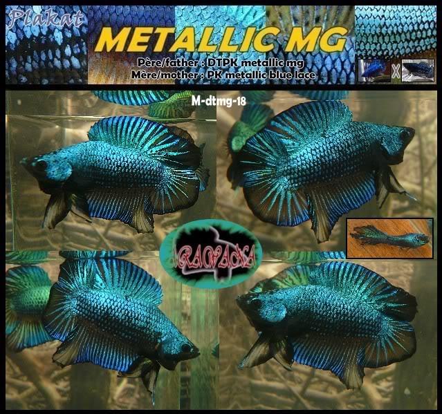 F3 DTPK mustard gaz metalliques, les photos MStmg18collageV
