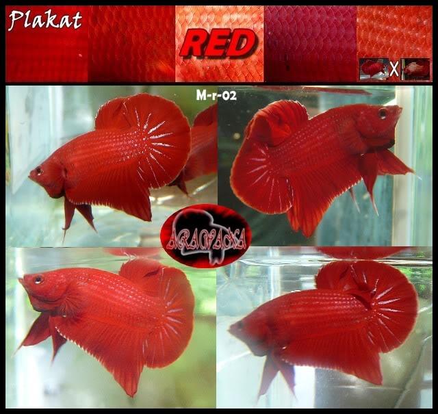 F2 plakat red Mr02CollageV