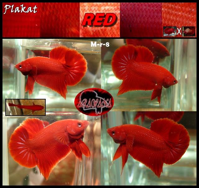 F2 plakat red Mr0803collageV