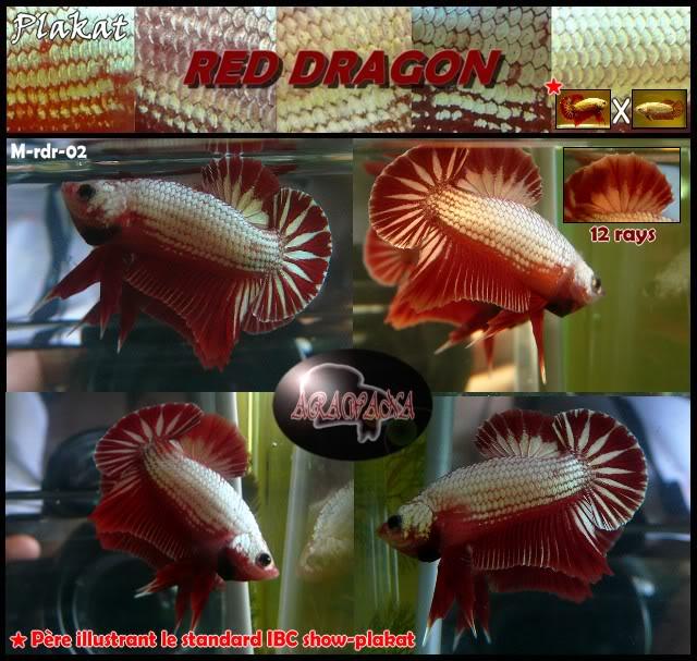 Red dragon 4 ème génération Mrdr02