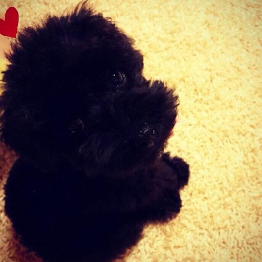 Taeyeon muestra a su nuevo bebé TaeBaby01_zps57d690a4