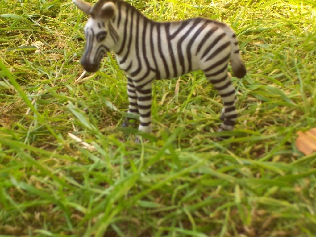 zebra veulen-uit collectie(1999 T/M 2008) Schleich-S146