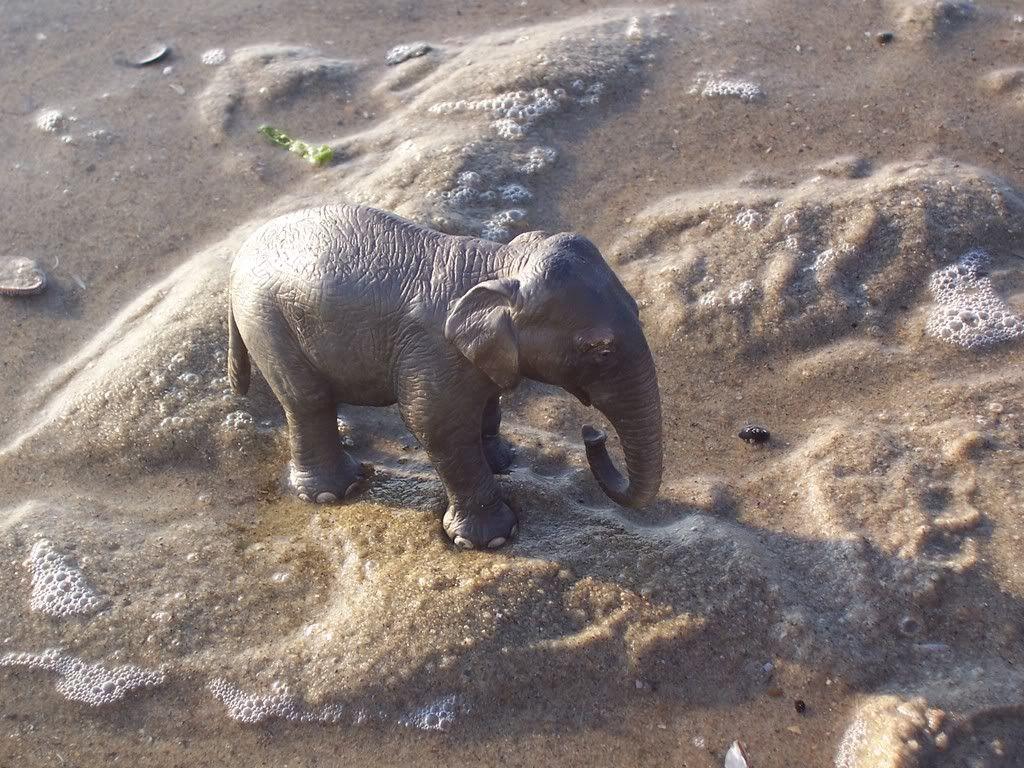 Aziatische olifant koe- in collectie sinds 2005 Schleich-S149