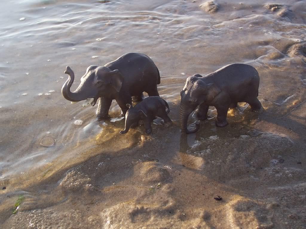 Aziatische olifant koe- in collectie sinds 2005 Schleich-S151