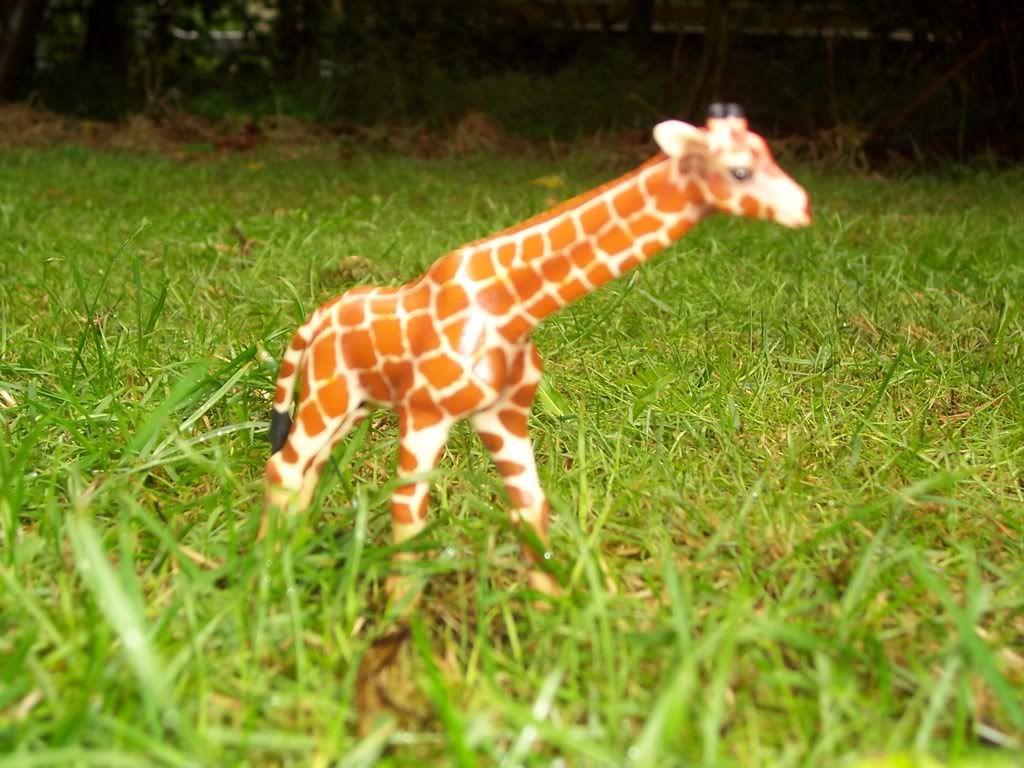 giraffe veulen-in collectie sinds 2004 Schleich-S166