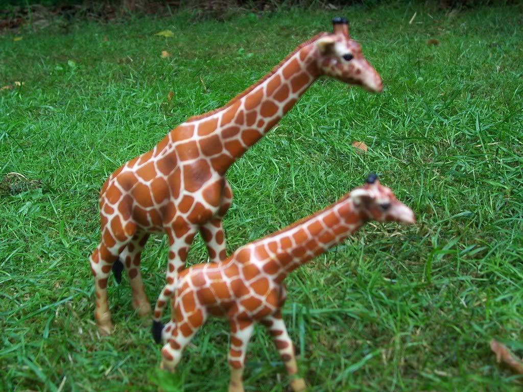 giraffe veulen-in collectie sinds 2004 Schleich-S168