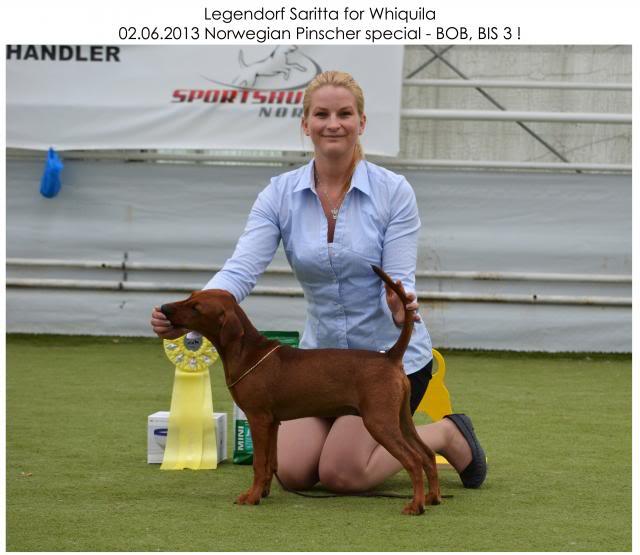 Legendorf Saritta for Whiquila UnikNPK_zps049f20ea