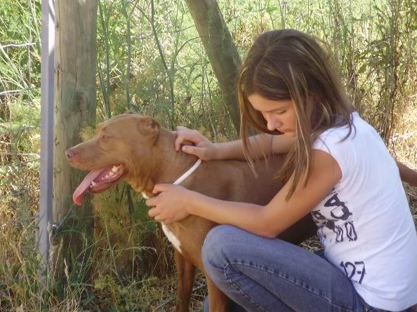 Lia, Doce Pitbull, Fêmea, 2 anos, Para Adopção! 076