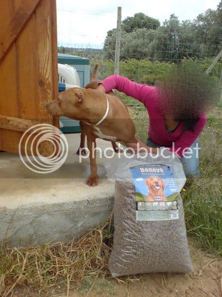 "Lia, doce pitbull com Leishmaniose - ""a nossa protegida"" 230528_"