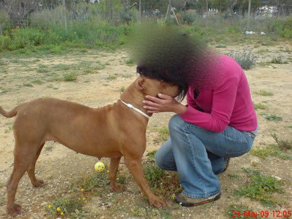 "Lia, doce pitbull com Leishmaniose - ""a nossa protegida"" 2305_"