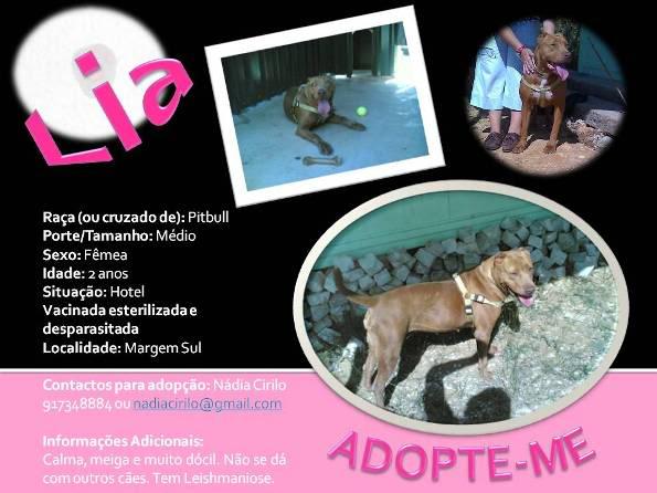 Lia, Doce Pitbull, Fêmea, 2 anos, Para Adopção! Lia-Divulgao-1