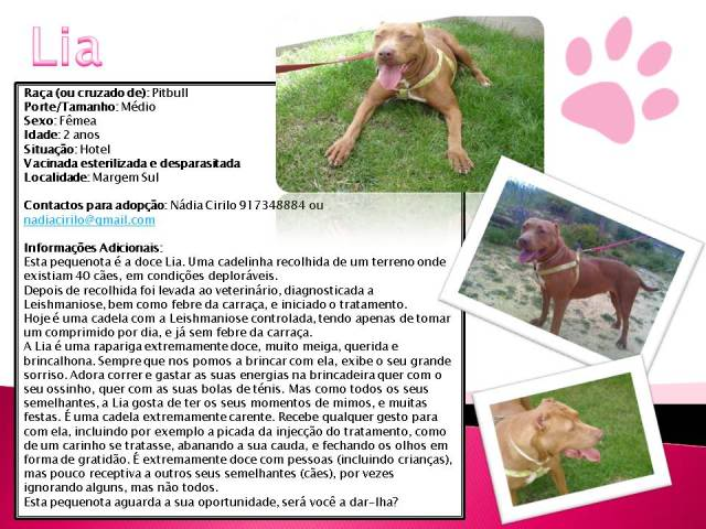 Lia, Doce Pitbull, Fêmea, 2 anos, Para Adopção! Lia-Divulgao