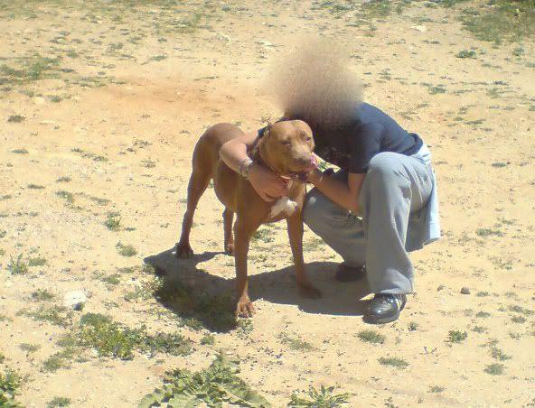 """Lia, doce pitbull com Leishmaniose - """"a nossa protegida"""" Lia5_"""