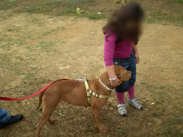 "Lia, doce pitbull com Leishmaniose - ""a nossa protegida"" P5090849_"