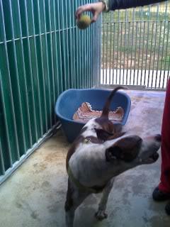 """Doces: Lia e Shiva - resgatadas do """"Caso do Monte da Caparica"""" Moto_0451_"""