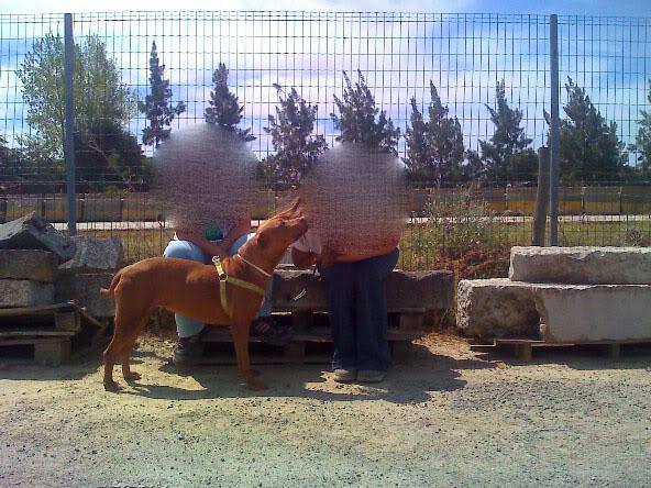 Lia, Doce Pitbull, Fêmea, 2 anos, Para Adopção! Moto_0976_
