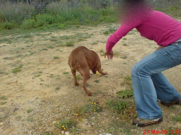 """Lia, doce pitbull com Leishmaniose - """"a nossa protegida"""" Visita23_"""