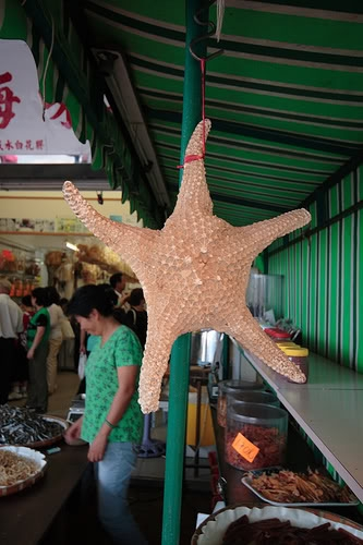 Patrick The Starfish......... 311722309_40d43cbd56