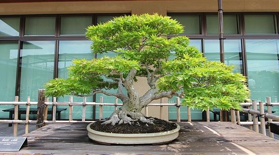 [Đời sống - Văn hóa] Bonsai 2097_05_zps4082d958