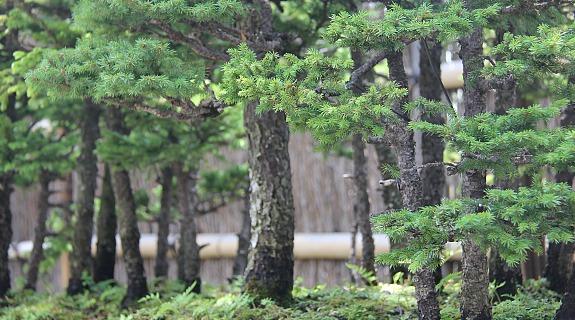 [Đời sống - Văn hóa] Bonsai 2097_06_zps36bbd3fb