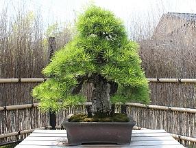 [Đời sống - Văn hóa] Bonsai 2097_07_zpsd322b16e
